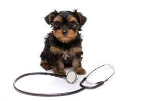 Agoura Hills Animal Hospital - We are here for you