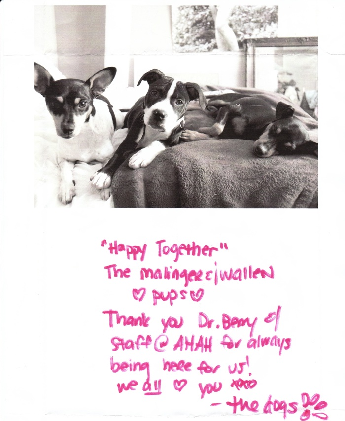 Testimonials  - Always Together - Agoura Hills Animal Hospital